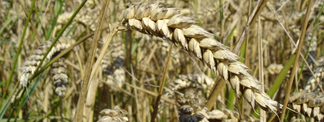On the issue of gluten…
